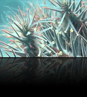 Crown of Thorns Starfish – The Monsters from the Shallows
