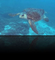 LOST YEARS – A Sea Turtle Odyssey