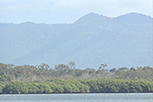 Mountains and mangroves